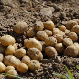 cartof-tratamente