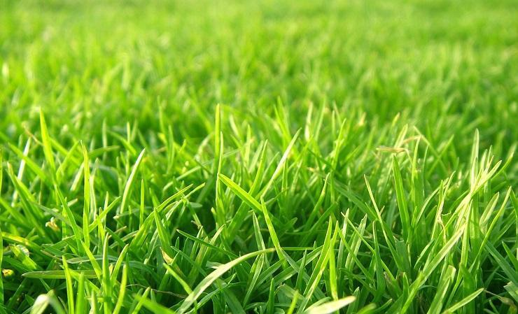 Tratament verde şi sănătate pentru iarbă