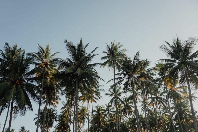 sfaturi-ingrijire-palmieri