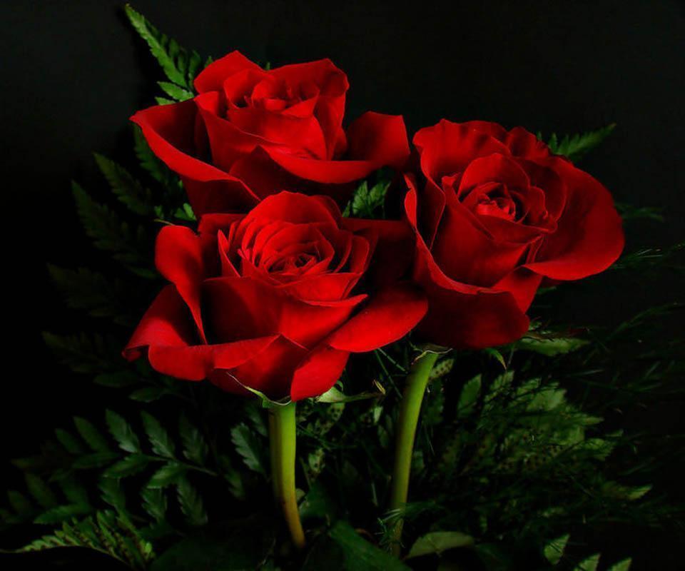 un vierme mic mananca frunzele si varful la trandafiri,cu ce trebuie sa stropesc   Botanistii
