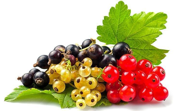 tratamentul articulației frunzelor de coacăze negre)