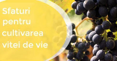 Evenimente - Lansari, cum se degusta un vin