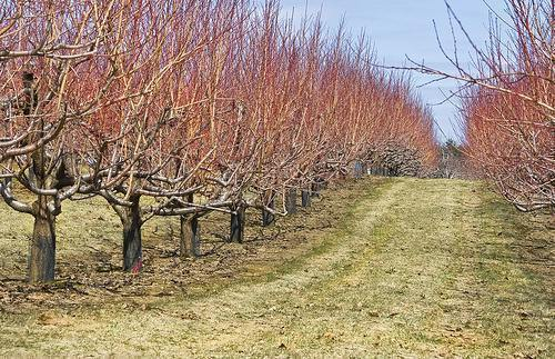 luna martie in pomicultura