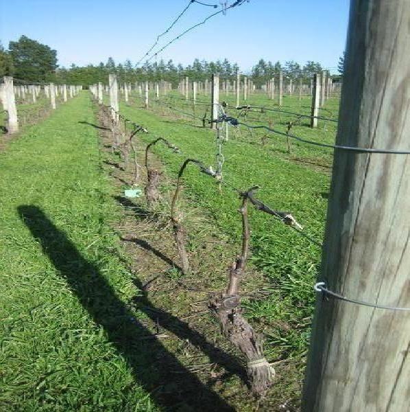 luna martie in viticultura