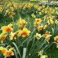 tratamente flori aprilie