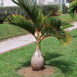 Decorative de interior palmieri - Comunitatea Botanistii