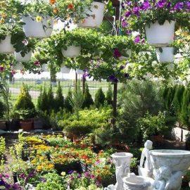 plante decorative de exterior