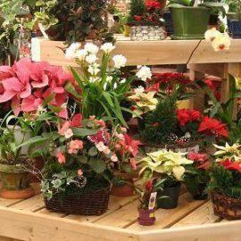 plante decorative interior