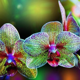 Decorative de interior orhidee - Comunitatea Botanistii