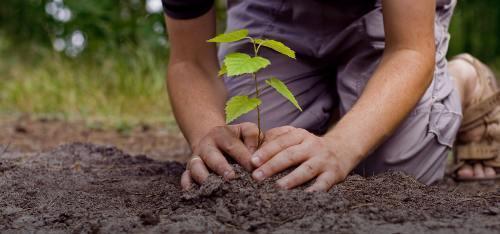 plantatie pomi