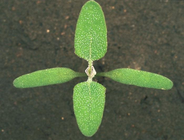 frunze 2
