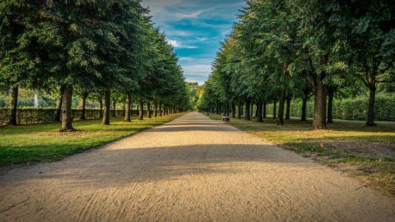plantarea-arborilor-ornamentali