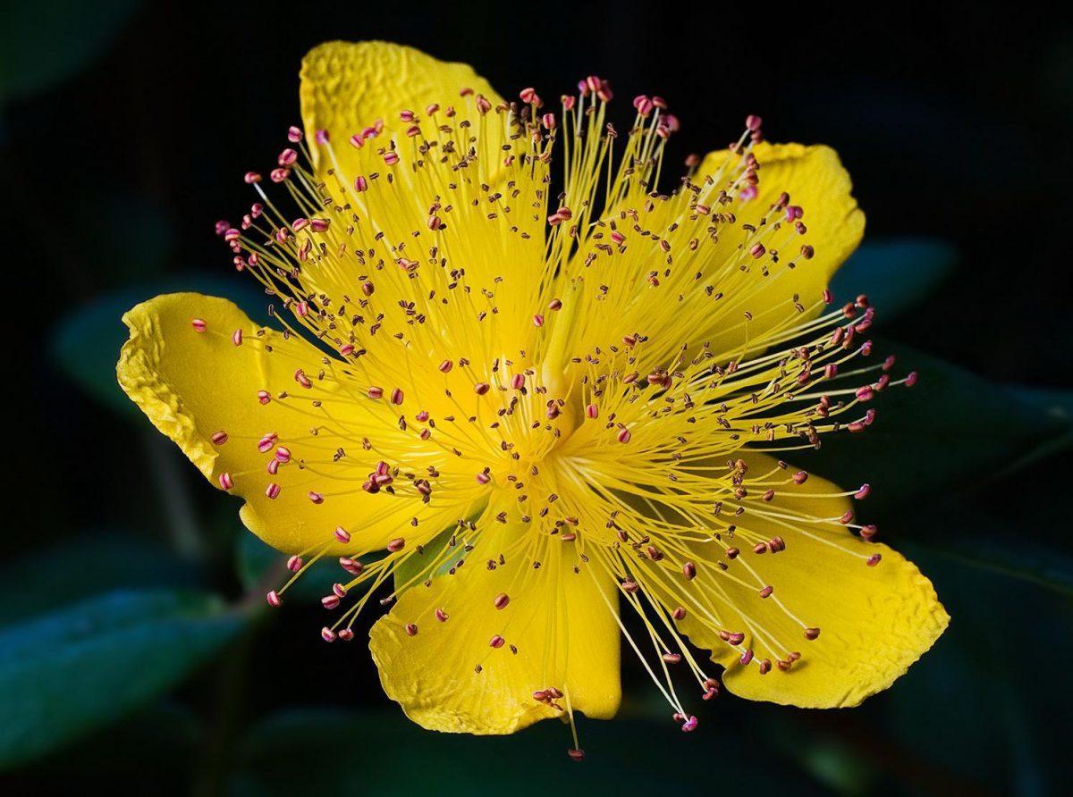 sunatoare floarea