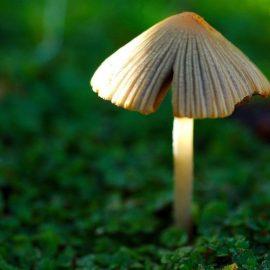 Legume ciuperci - Comunitatea Botanistii