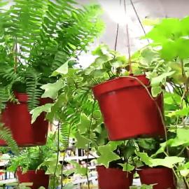 cum functioneaza produse protectia plantelor