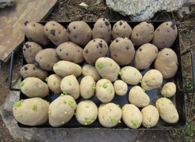 semanat-cartof