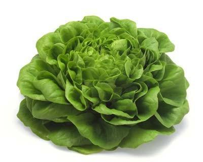 salata-planta
