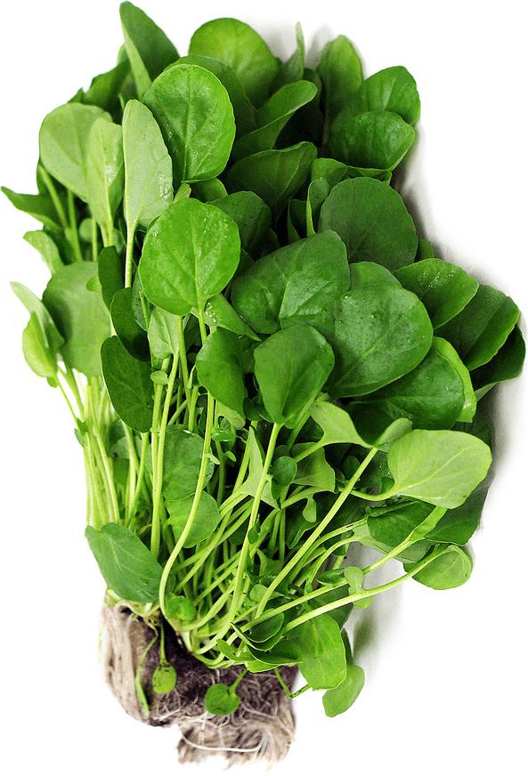 spanac-planta