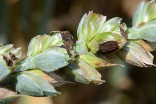 plante-atacate-1