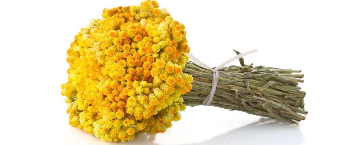 flori-nemuritoare