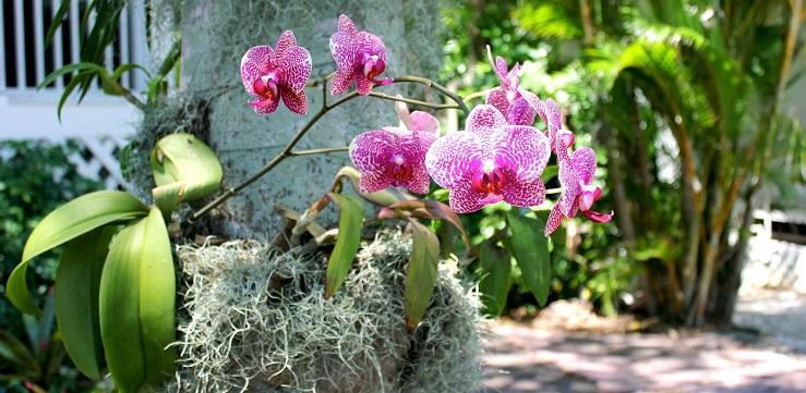 orhidee-epifita