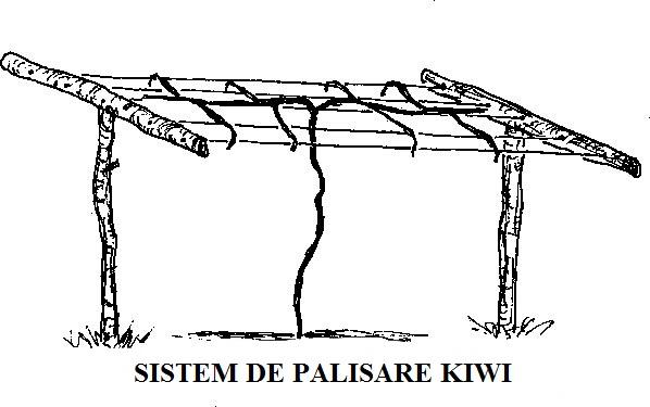 sustinere-kiwi