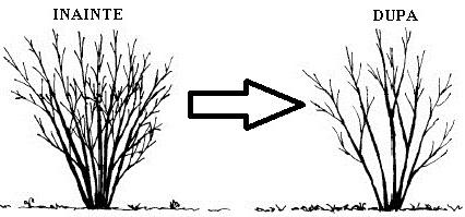 taieri-la-arbusti
