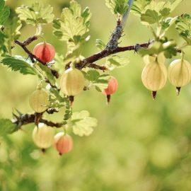 agris-taieri-recoltare-plantare-fertilizare
