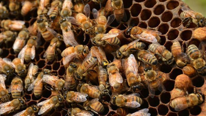 Interzicerea Neonicotinoidelor la culturile agricole