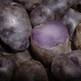 Legume cartof mov - Comunitatea Botanistii