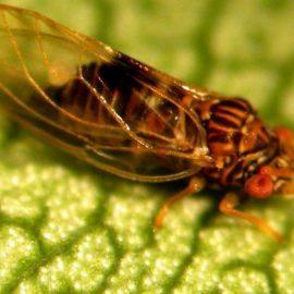 Insecte daunatoare purici - Comunitatea Botanistii