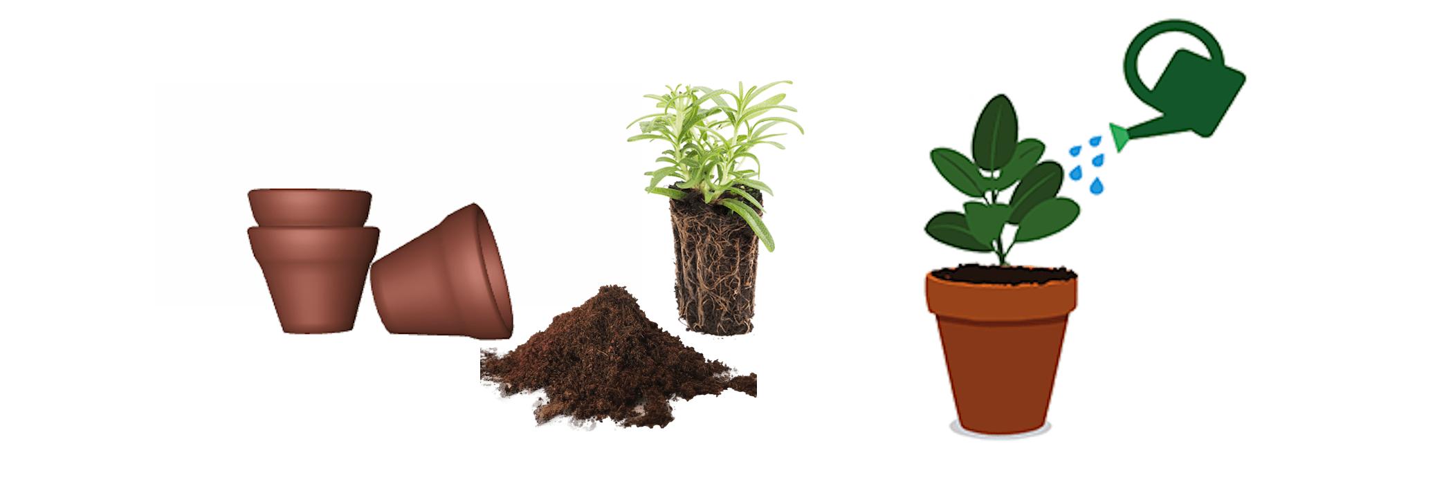 transplantare-plante-apartament