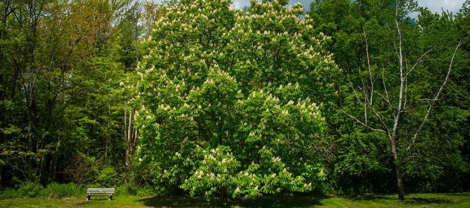 castanul-sfaturi-ingrijire-cultivare