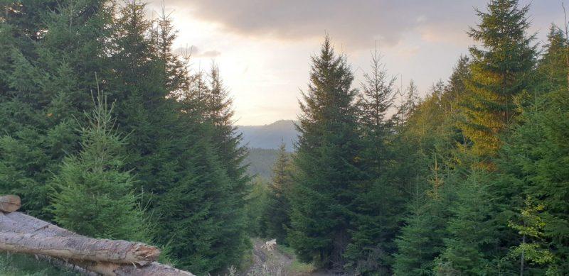 conifere-arbori-arbusti-sfaturi