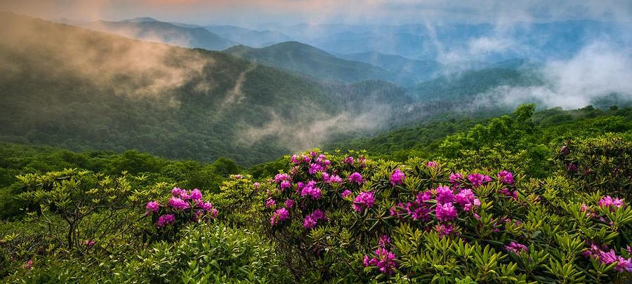 rhododendron-sfaturi-cultivare-ingrijire