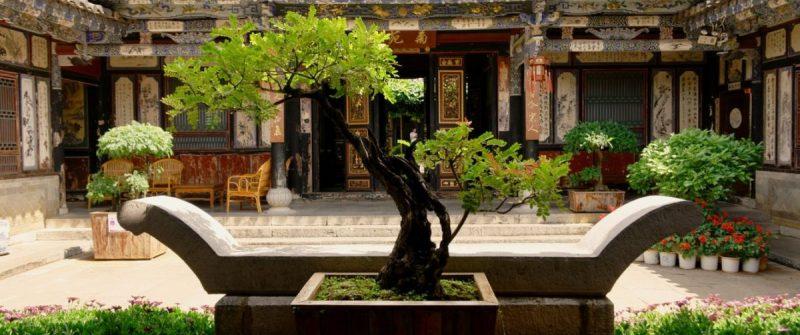 bonsai-sfaturi-ingrijire
