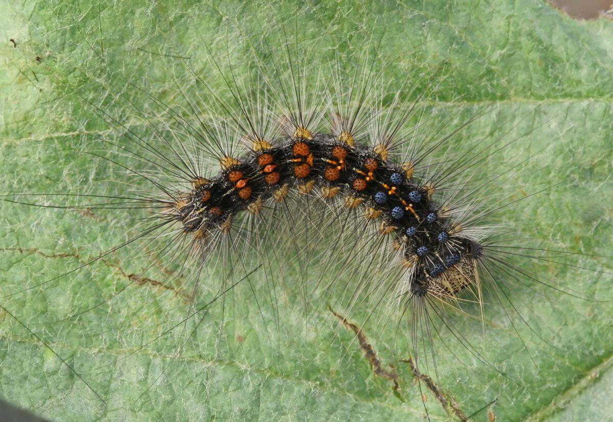 molia-1-catina