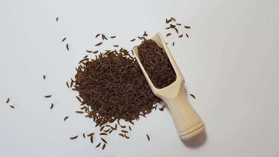 chimenul-cultivare