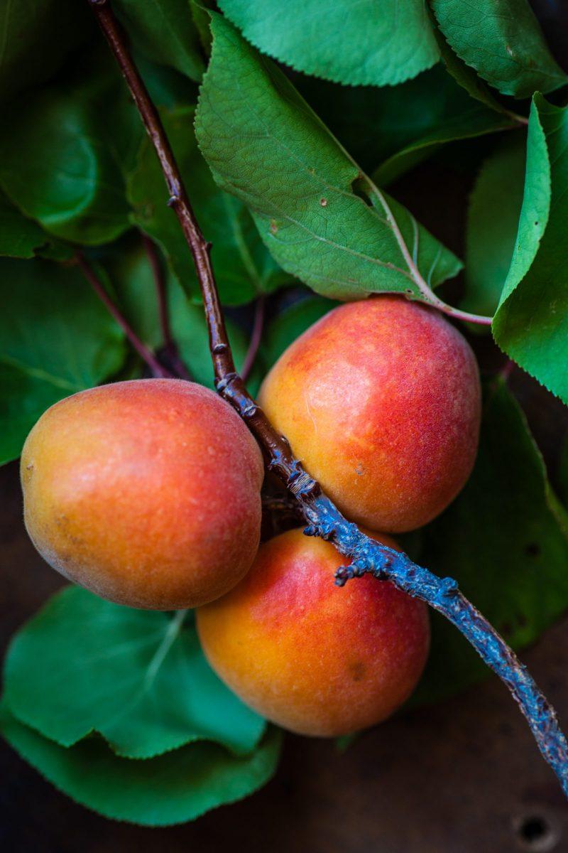 cum-cultivam-mango-acasa