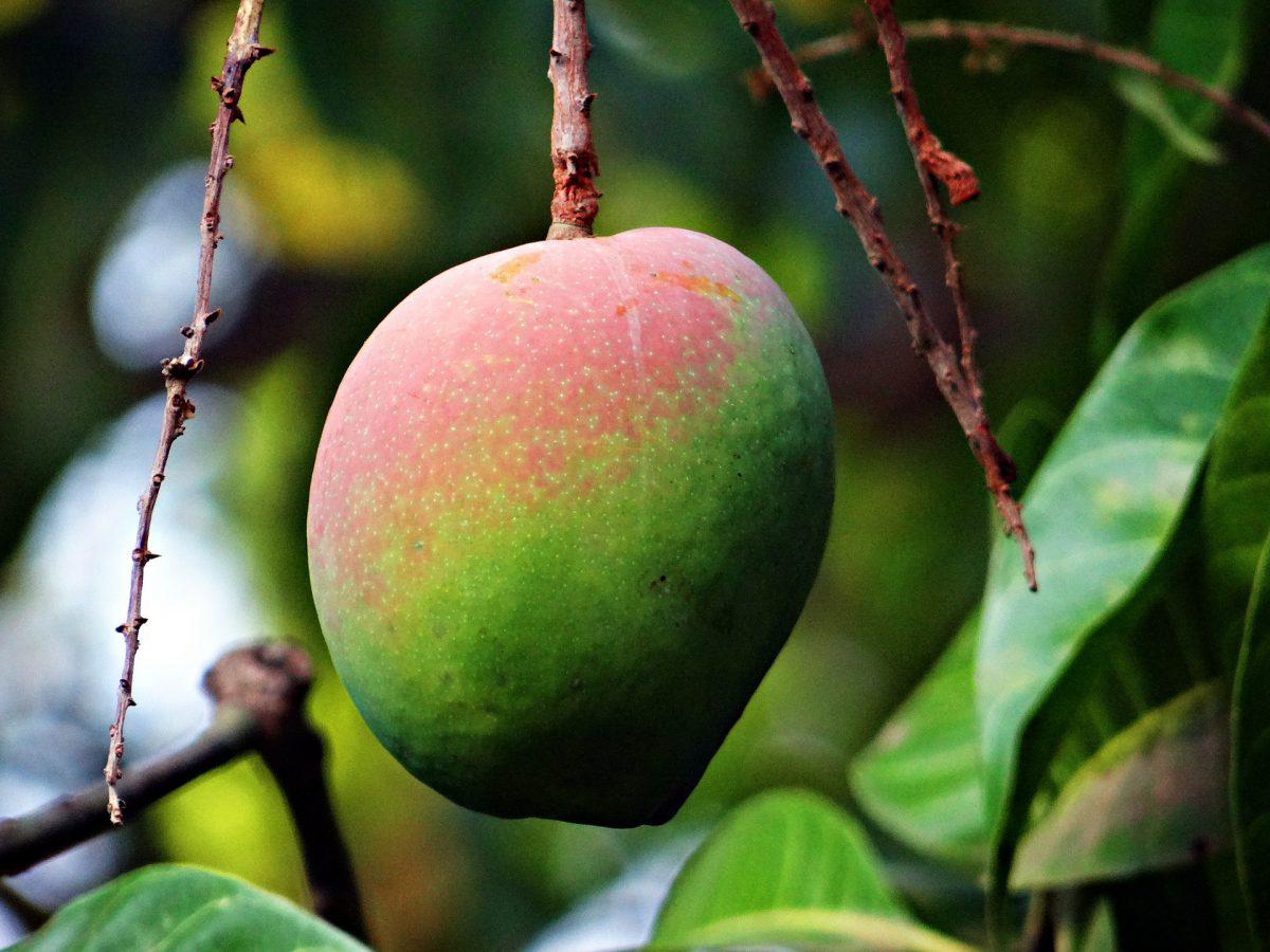 sfaturi-mango