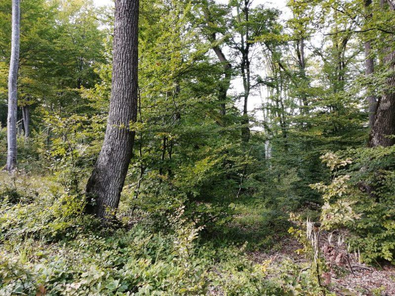 crestere.si.dezvoltare arborilor