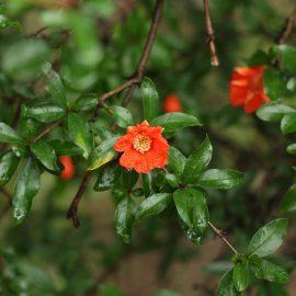 rodier.flori