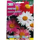 Crizanteme Robinson Hibrido, 1 g