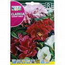 Clarkia Elegant Doble, 4 g