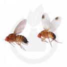 russell ipm attractant pheromone lure drosophila suzukii 50 p - 1