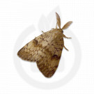 Atractant Feromonal Lymantria dispar, 50 bucati