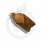 russell ipm pheromone lure epiphyas postvittana 50 p - 1