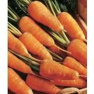 Morcov Chantenay Red Cored, 500 g