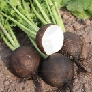 Seminte Ridichi De Iarna Negre Ronde Zwarte, 1 kg