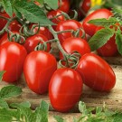Tomate Rio Grande, 50 g